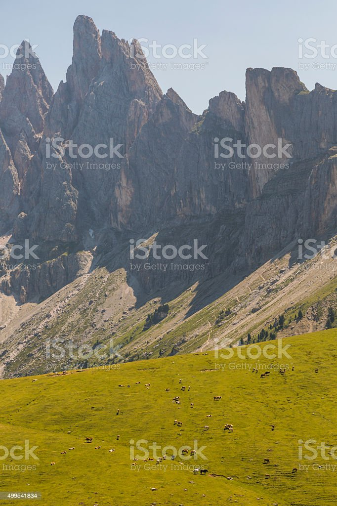 Cows and horsen in Dolomites stock photo