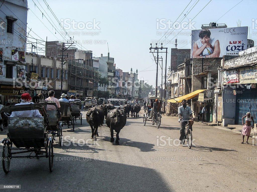 Cows and rickshaws Varansi stock photo
