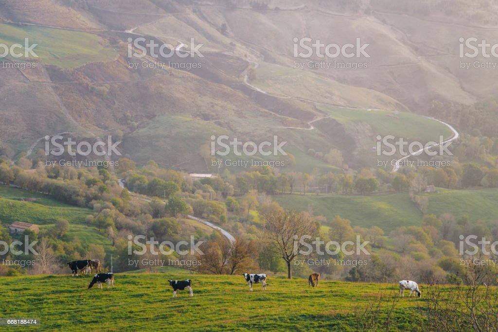 Cows at green area stock photo