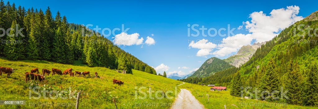 Cows grazing in idyllic Apline meadow valley summer Alps panorama stock photo