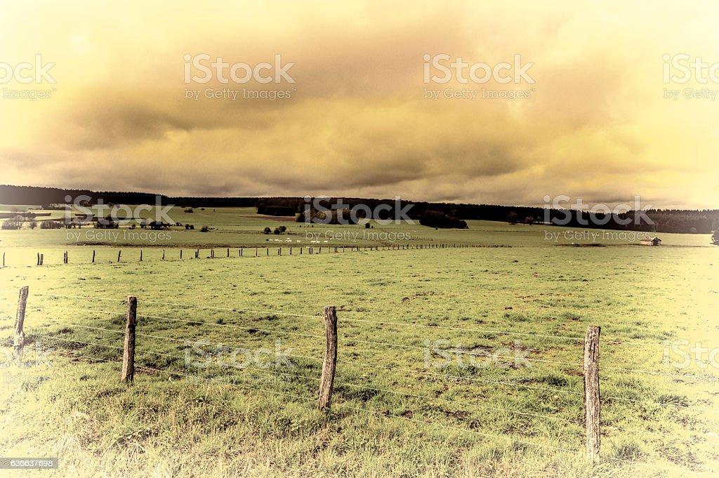 Cows Grazing on Green Pasture in Belgium. stock photo