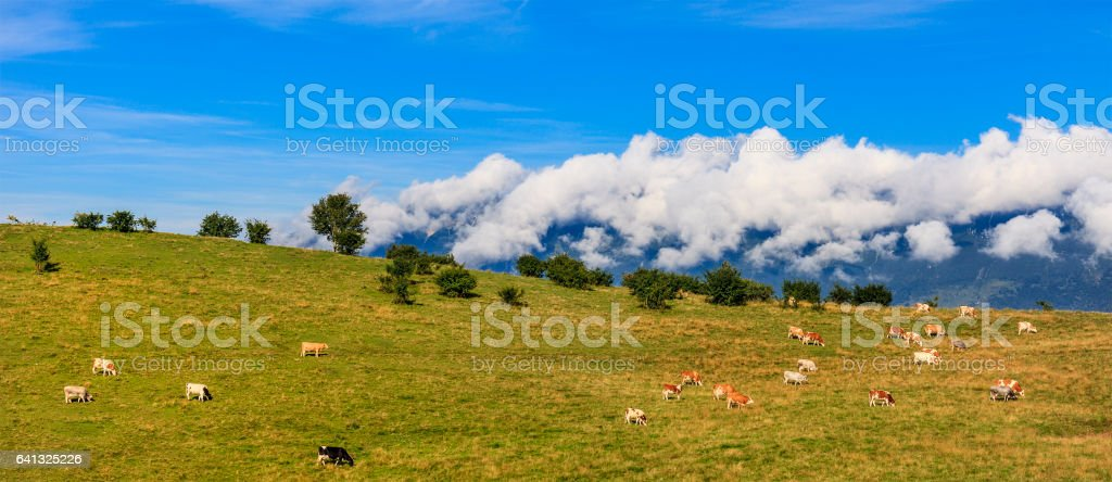 Cows in Lessinia, Italy stock photo