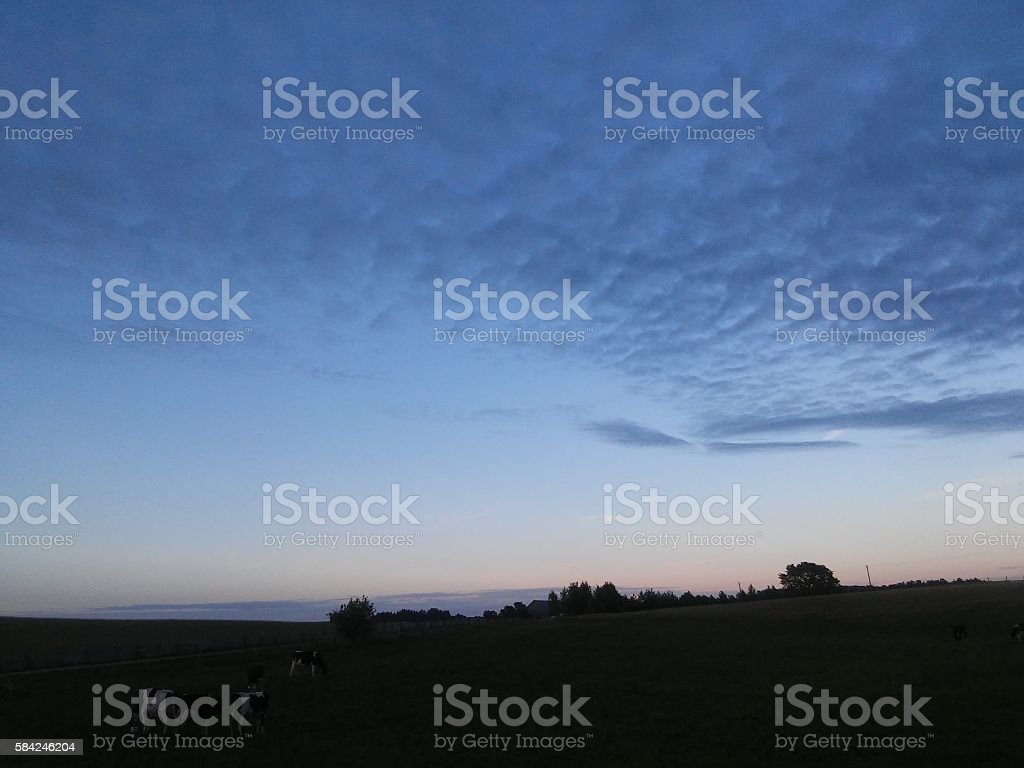 Cows in night stock photo