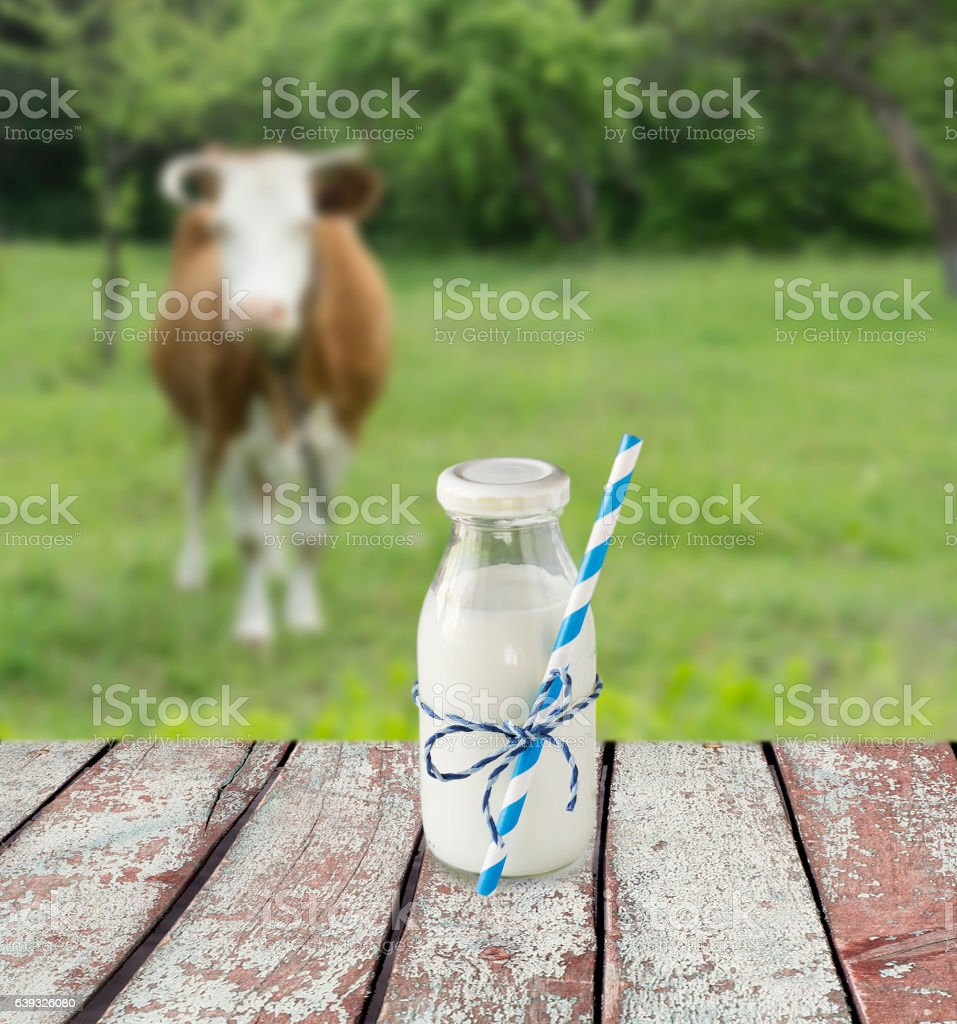 Cow's milk overlooking a meadow with grazing cow. stock photo