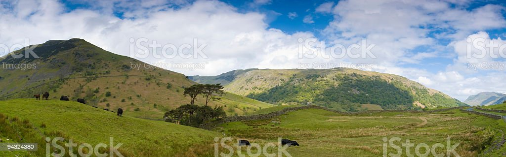 Cows, mountains, clouds royalty-free stock photo