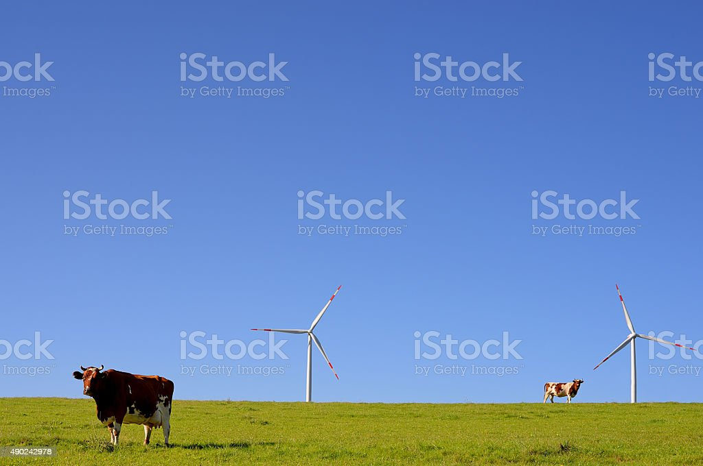 Cows on pasture in front of wind turbine stock photo