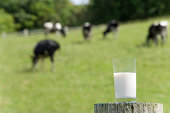 Cows on ranch and glass of milk