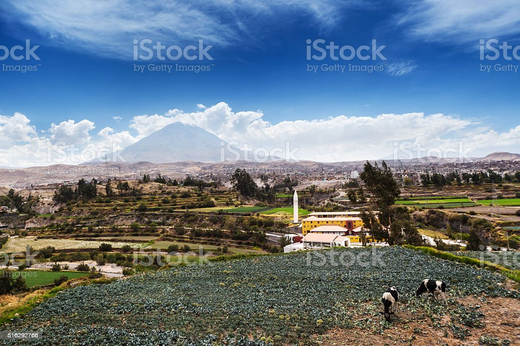 cows, volcano and old town stock photo