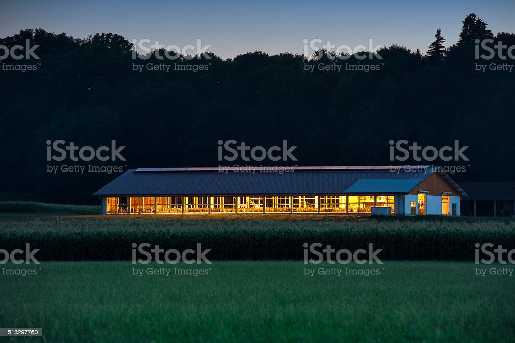 Cowshed with lights on at nignt. stock photo