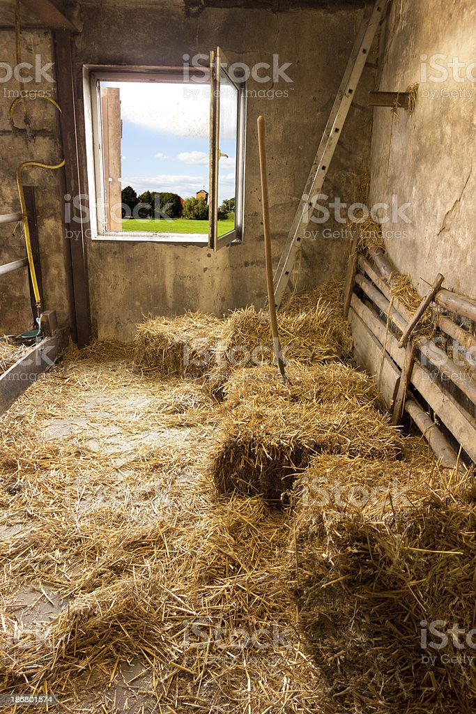 cowshed with open windows stock photo