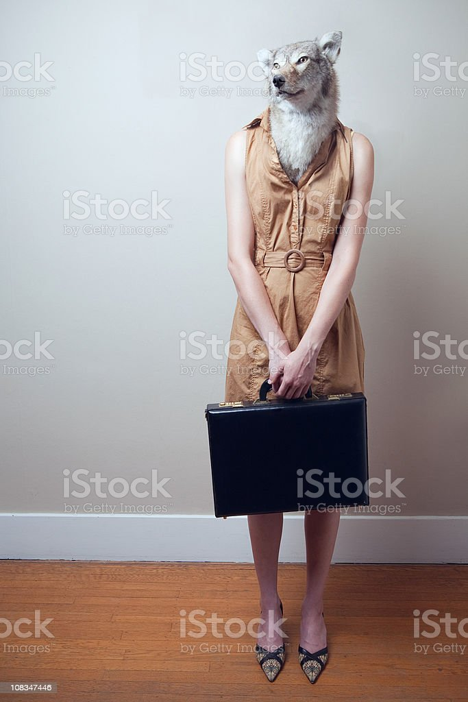 Coyote Business Woman stock photo