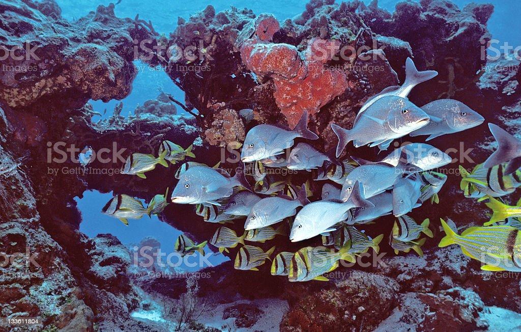 Cozumel de poissons photo libre de droits