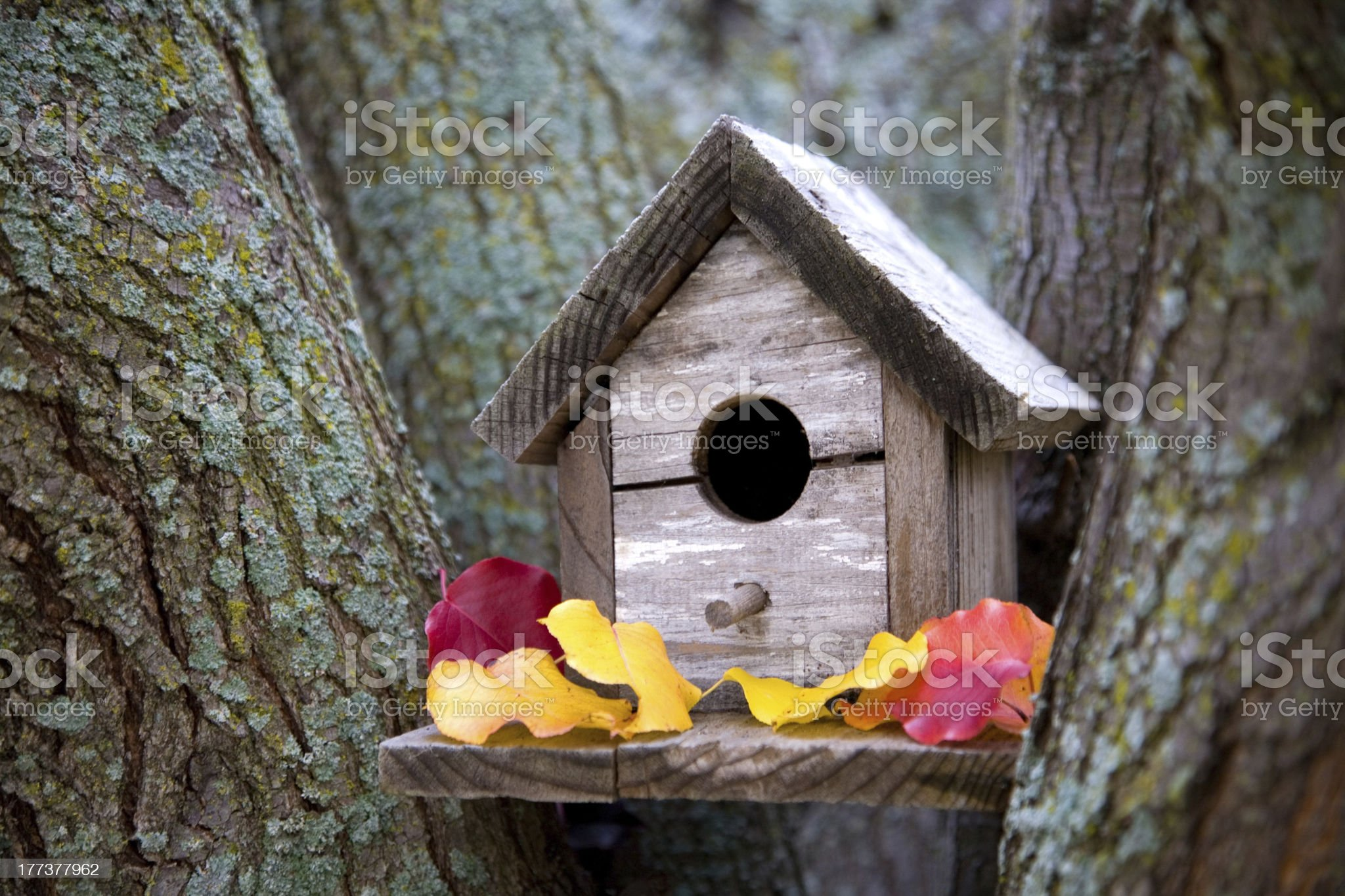 Cozy Birdhouse royalty-free stock photo