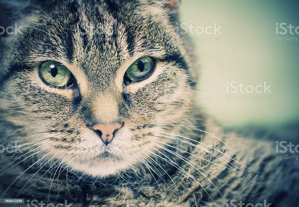 Cozy cat royalty-free stock photo