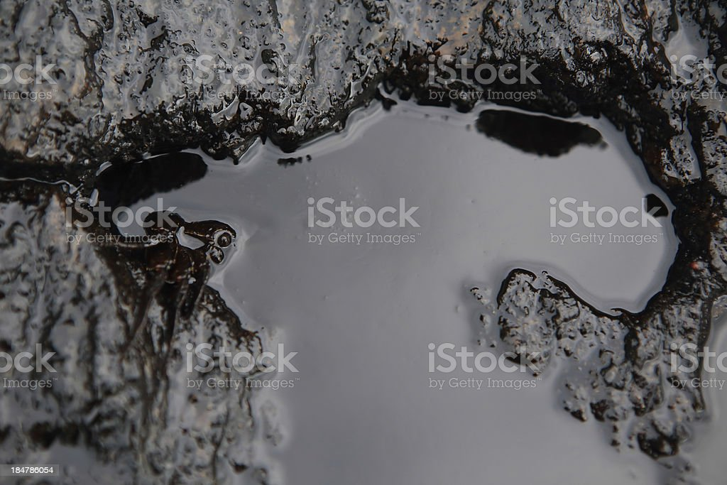 crab and crude oil spill on the stone a royalty-free stock photo