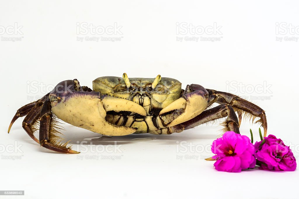 Crab and Flower stock photo