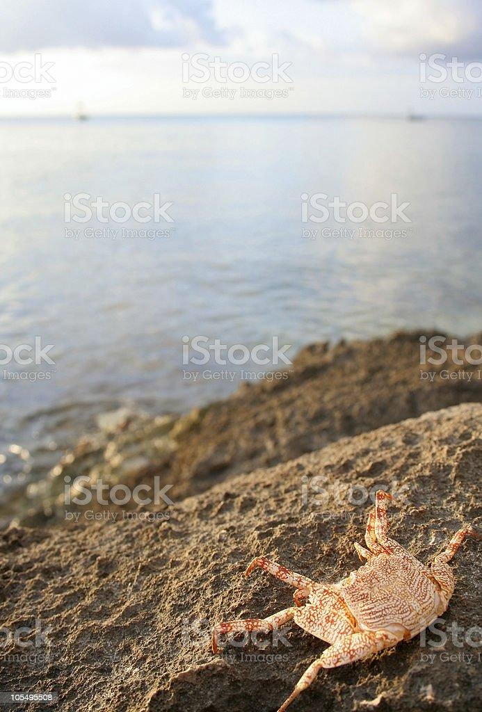 crab and sea stock photo