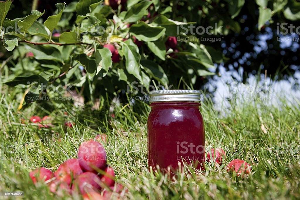 Crab Apple Jelly Jar on Grass Under Tree stock photo