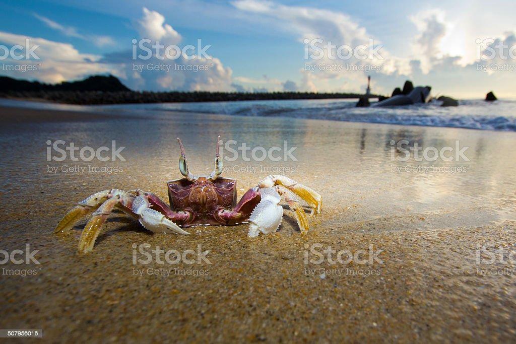 Crab at beach stock photo
