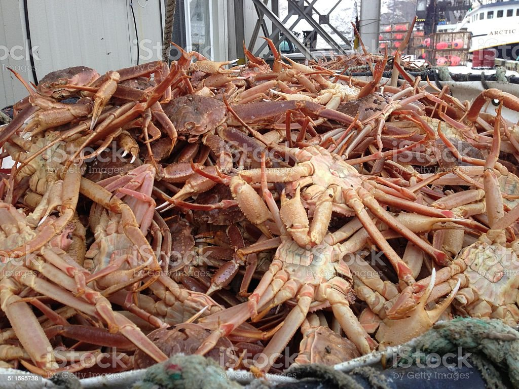 Crab Being Offloaded in Dutch Harbor, Alaska stock photo
