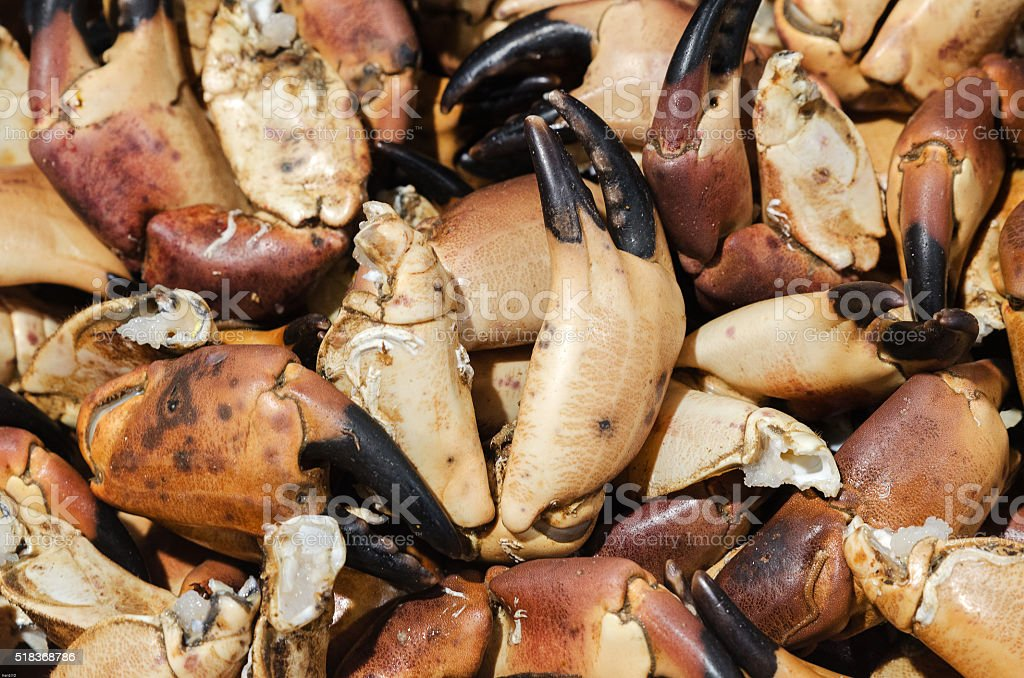 Crab claws stock photo