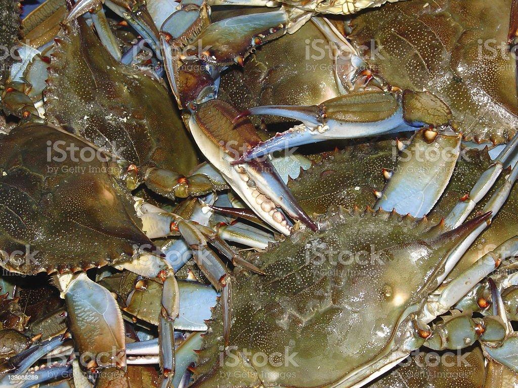 crab cluster stock photo