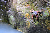 Crab crustacean in rainforest.