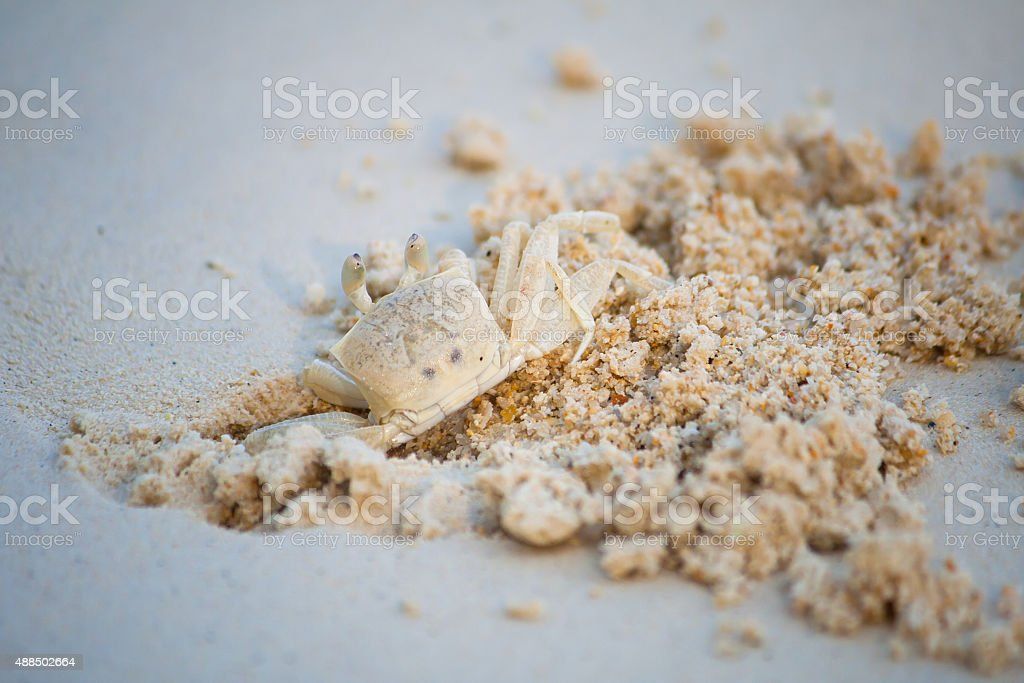 Crab dig the sand in on the beach. stock photo