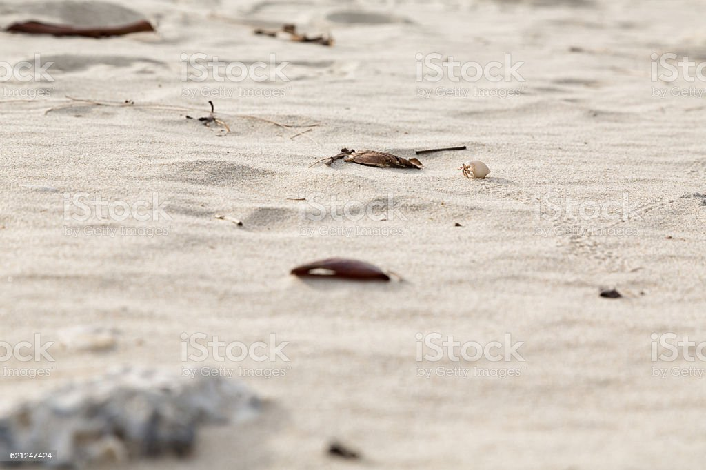 crab in the sand stock photo