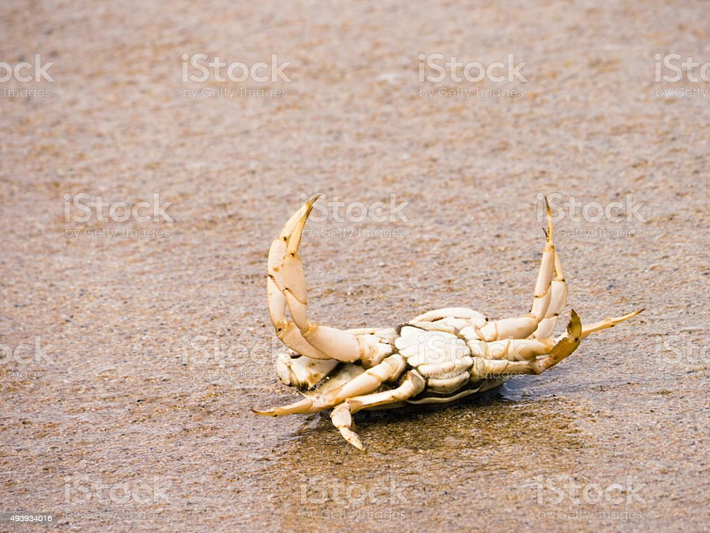 Crab is in the trouble stock photo