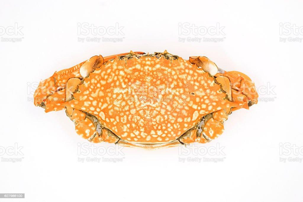 crab isolated on white background stock photo