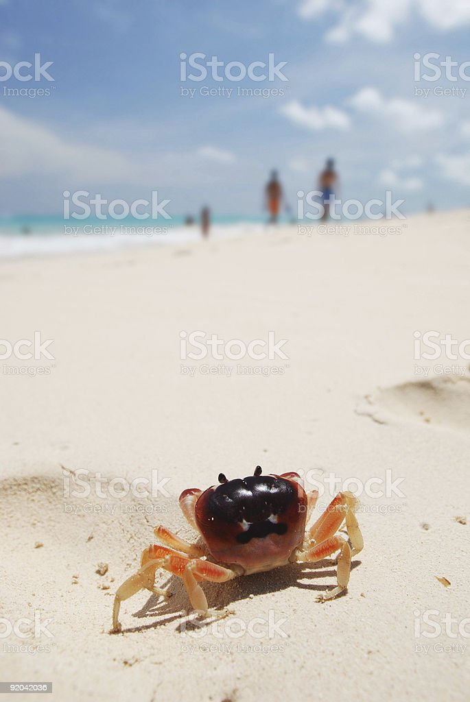 Crab on a beach royalty-free stock photo