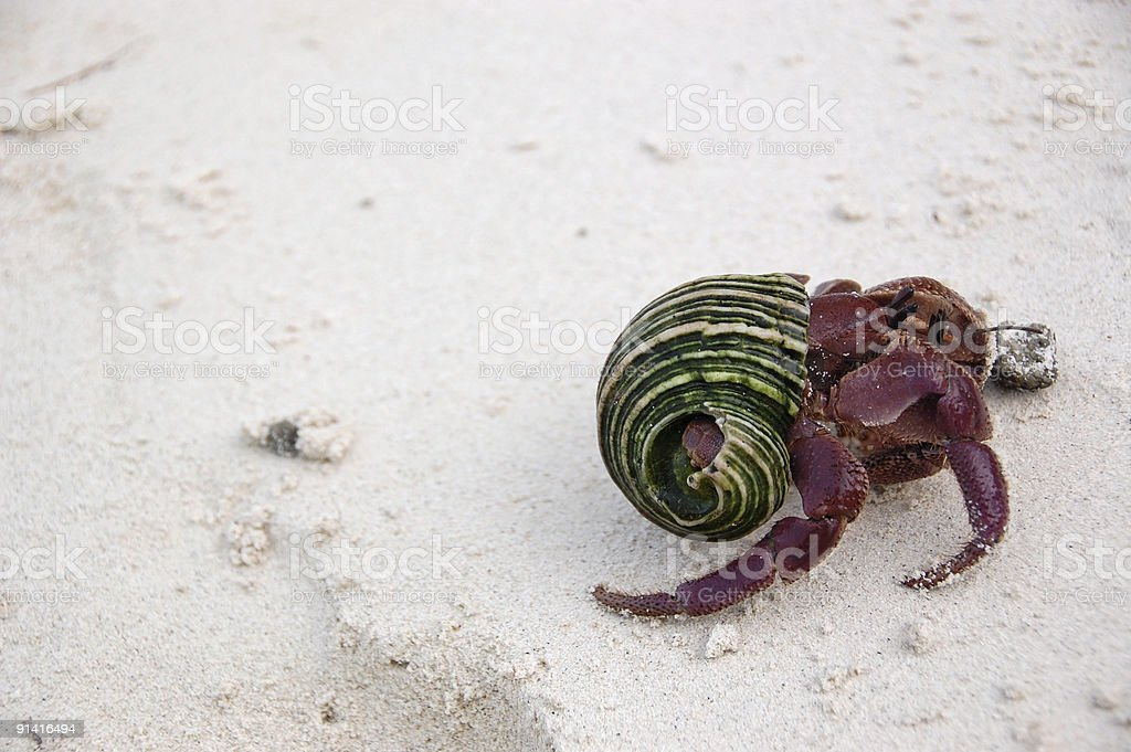 Crab on a south pacific beach stock photo