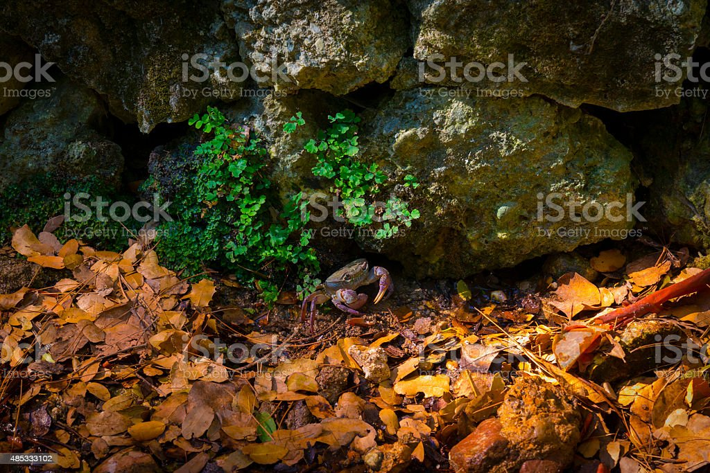 Crab on rocks in a valley on Rhodes stock photo