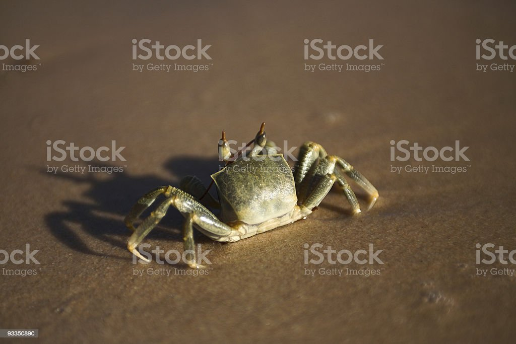 crab on the beach stock photo