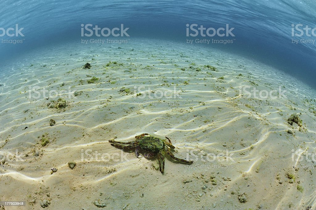 Crab on the sea bottom royalty-free stock photo