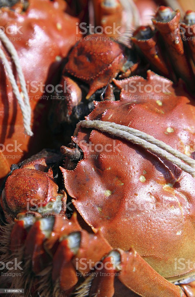 crab royalty-free stock photo