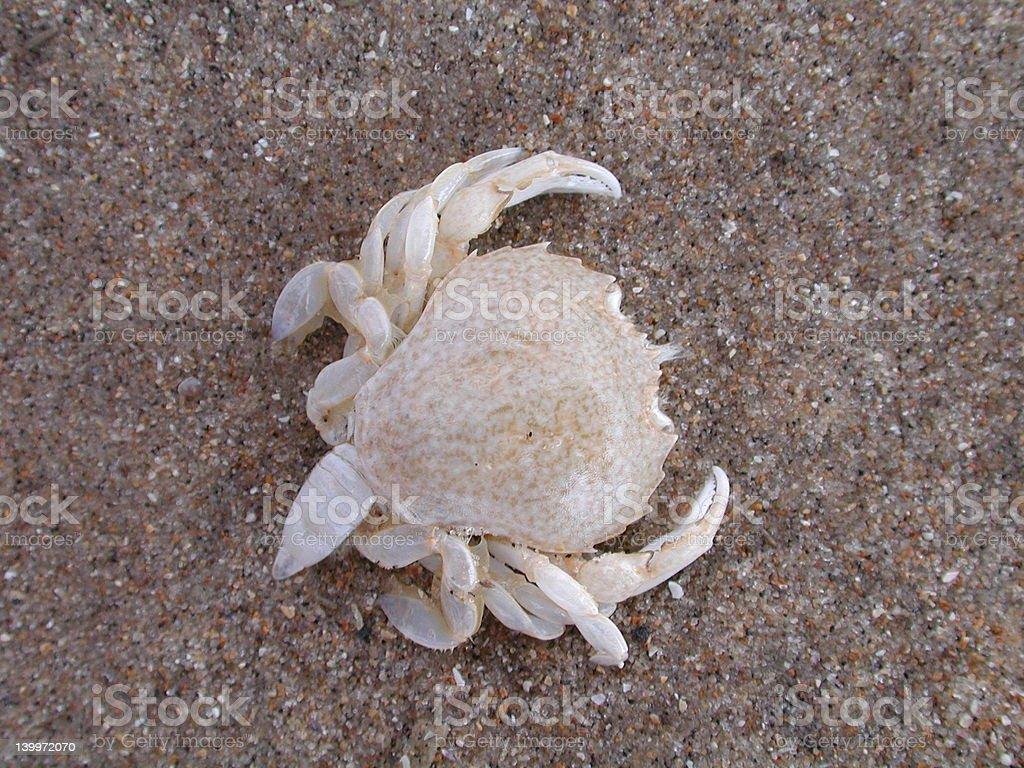 Crab shell on beach stock photo