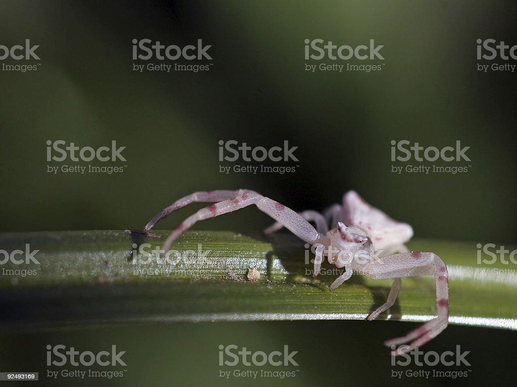 Crab spider on leaf stock photo
