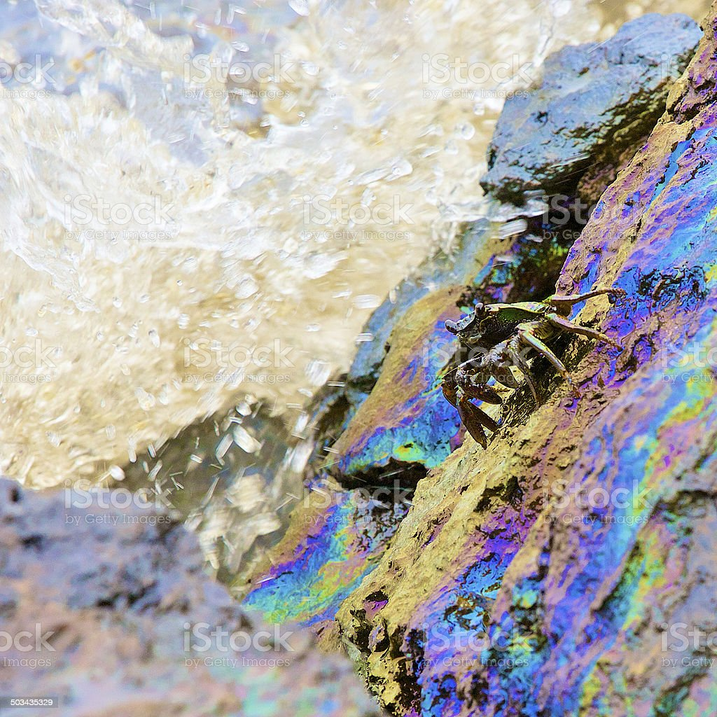 crab with crude oil spill on the stone stock photo