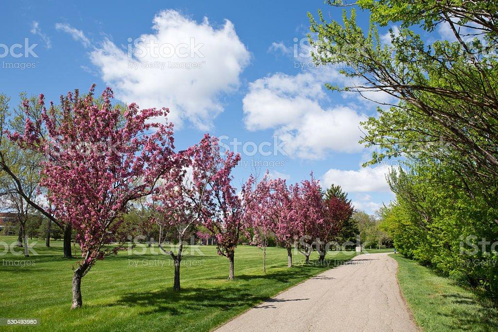 Crabapple trees on West Wascana Trail in Regina Saskatchewan stock photo