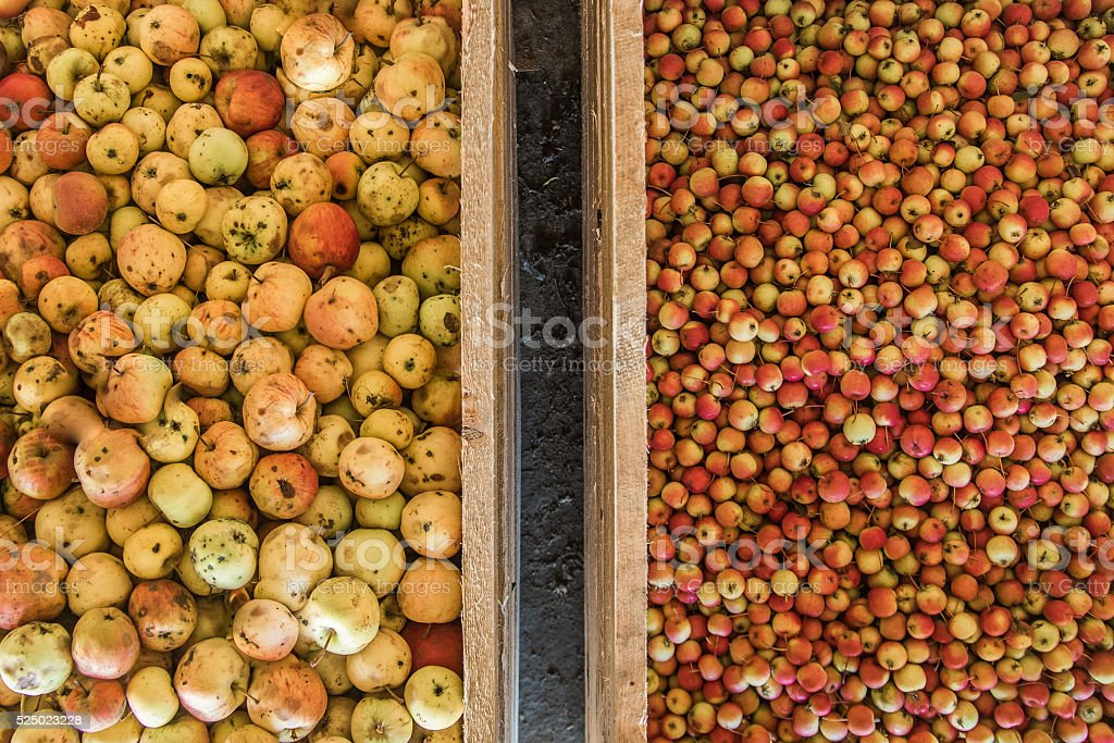 Crabapples and regular apples stock photo