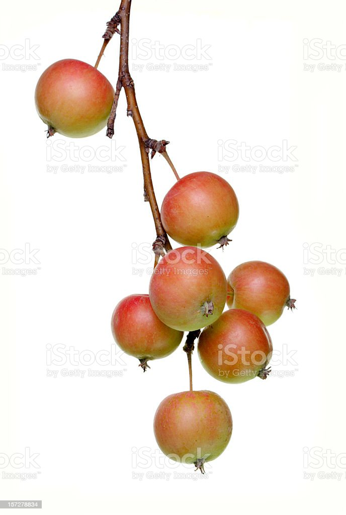 crabapples stock photo