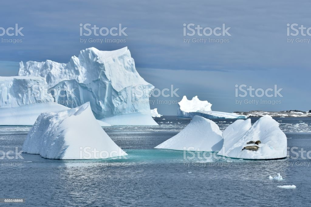 Crabeater Seals and Icebergs stock photo