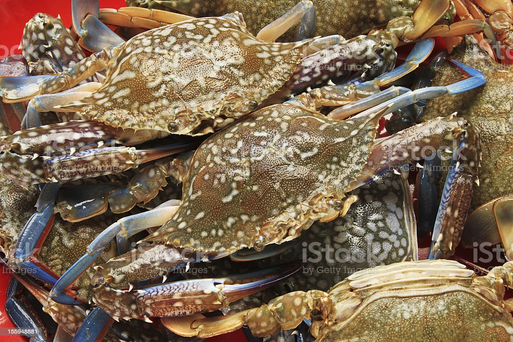 Crabs royalty-free stock photo