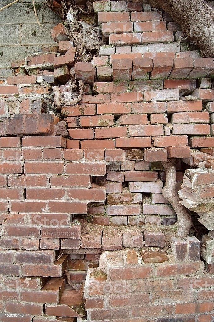 Cracked Brick and Tree royalty-free stock photo
