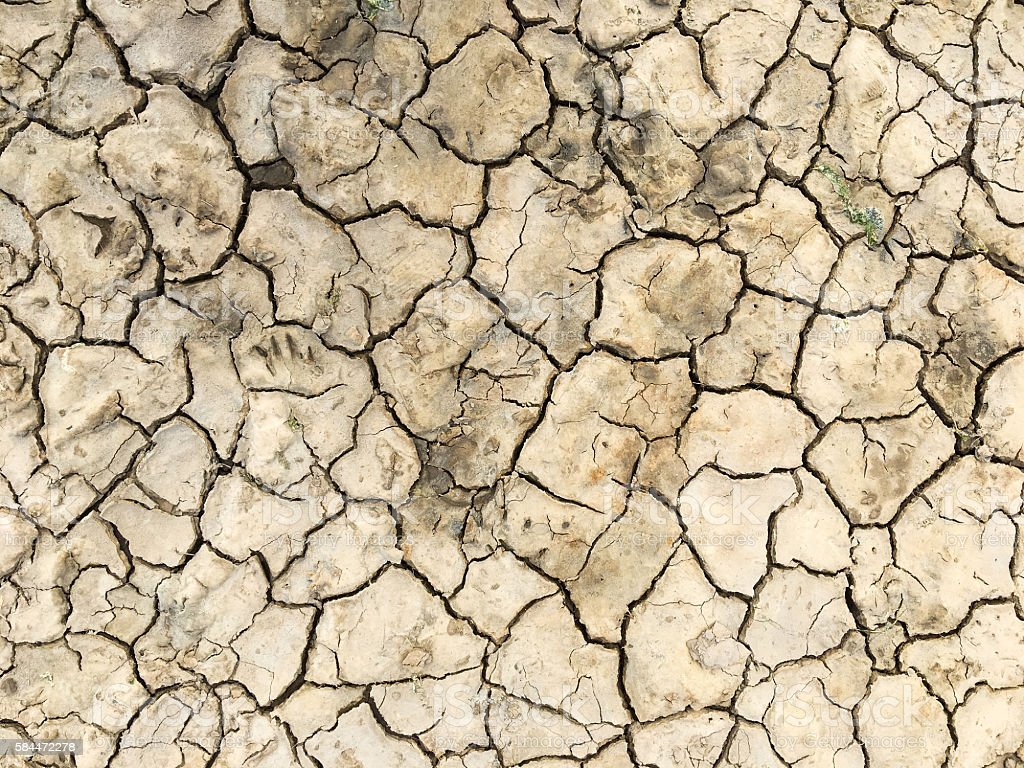 Cracked dried earth stock photo