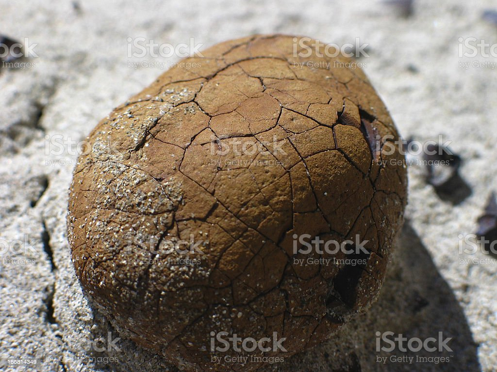 Cracked Egg Rock royalty-free stock photo