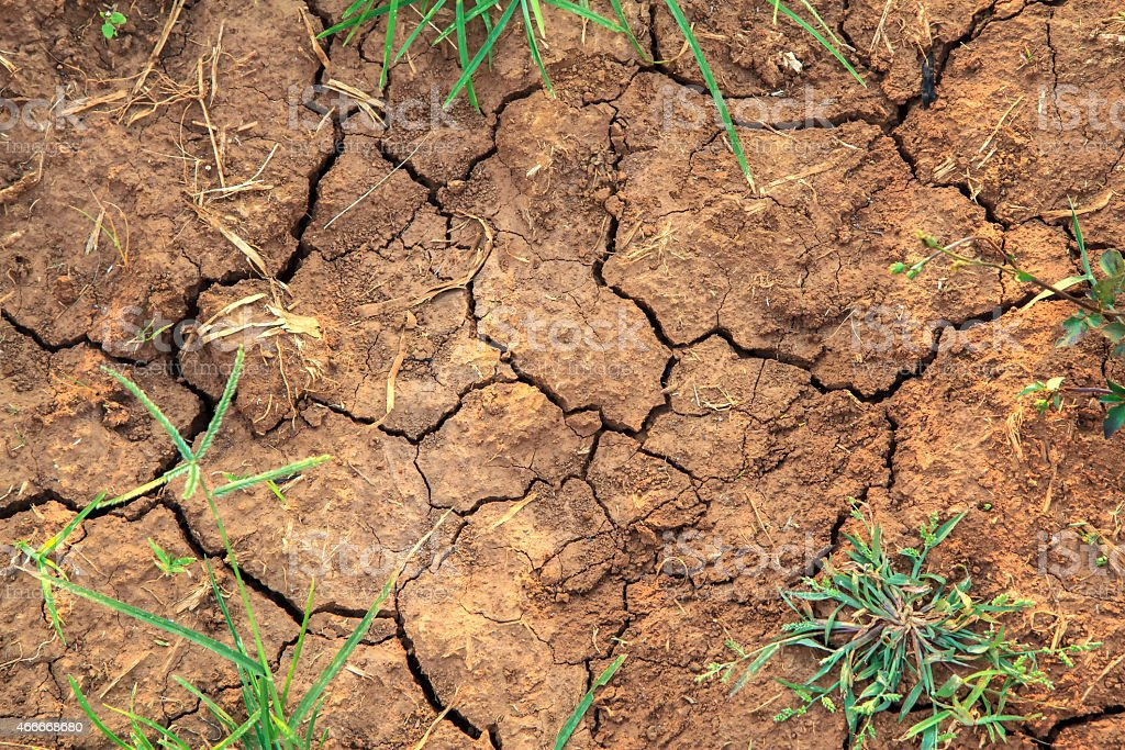 Cracked Ground with grass royalty-free stock photo