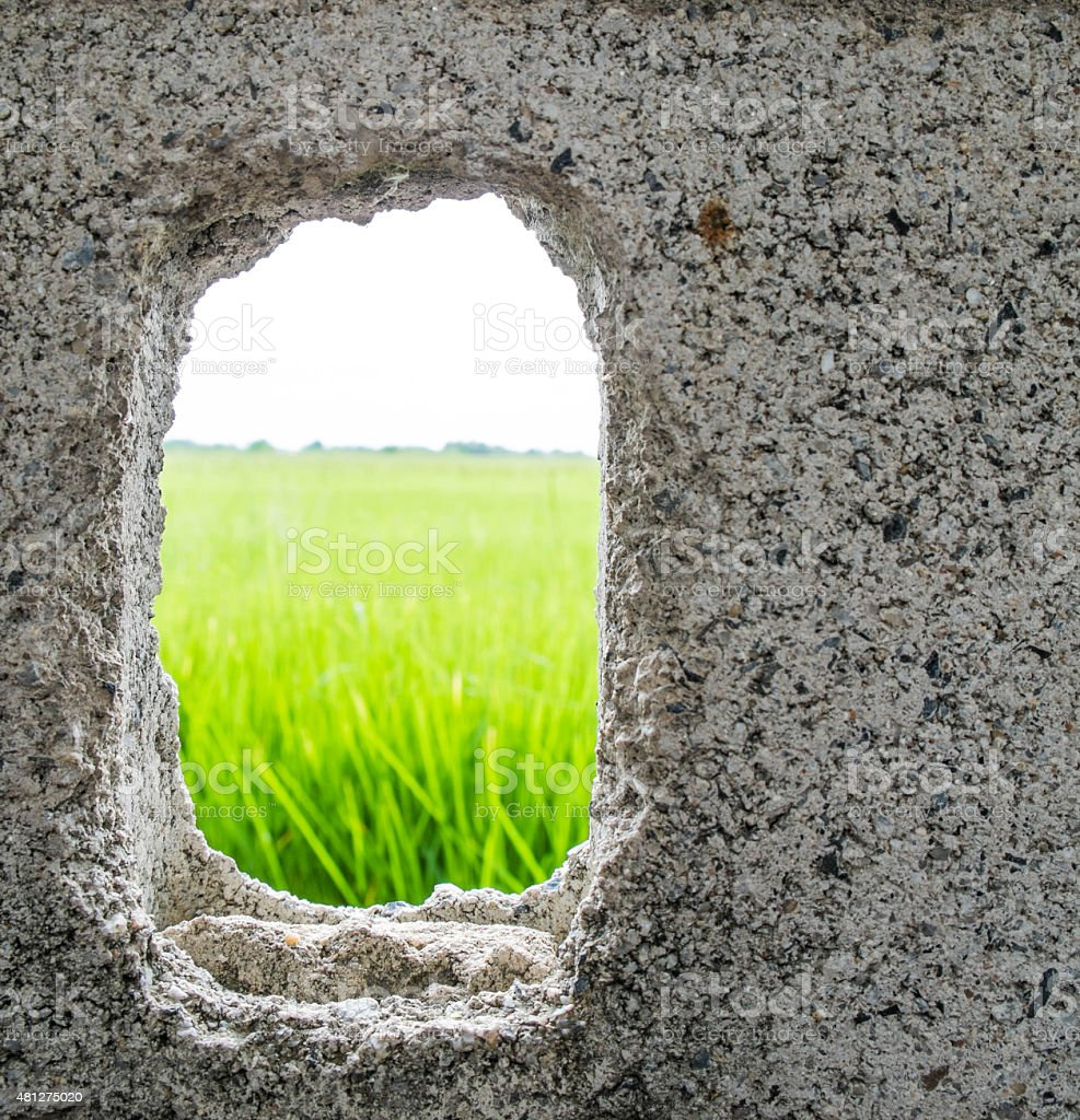 Cracked hole on cement wall see the green rice field stock photo